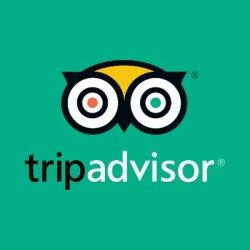 TripAdvisor Stock